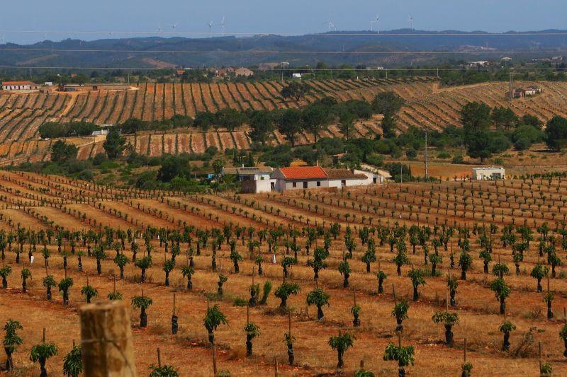 Regenerarte: maior monocultura de abacate da Europa no Algarve usa 3,5 milhões de litros de água por dia