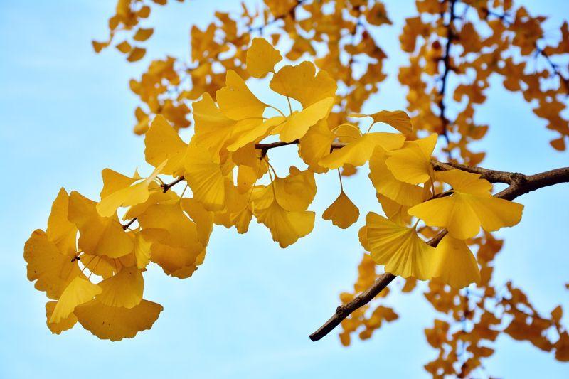 """No dia 14 de setembro, a SPECO vai celebrar o """"Ecology Day"""""""