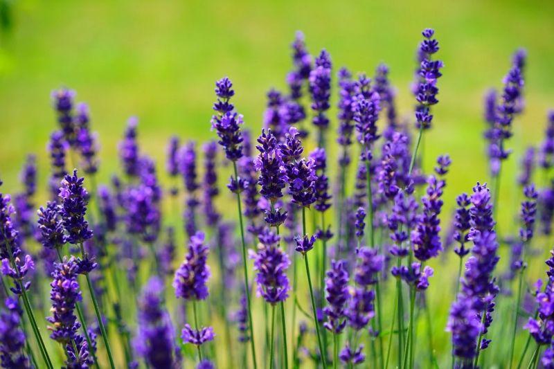 O UniPlanet vai promover formação online gratuita em plantas aromáticas e medicinais