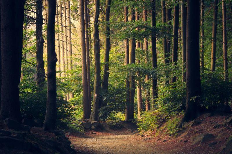 Mini-florestas ajudam a combater as alterações climáticas