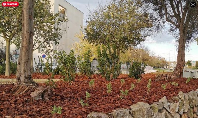 Universidade de Évora vai criar jardins sustentáveis com plantas autóctones