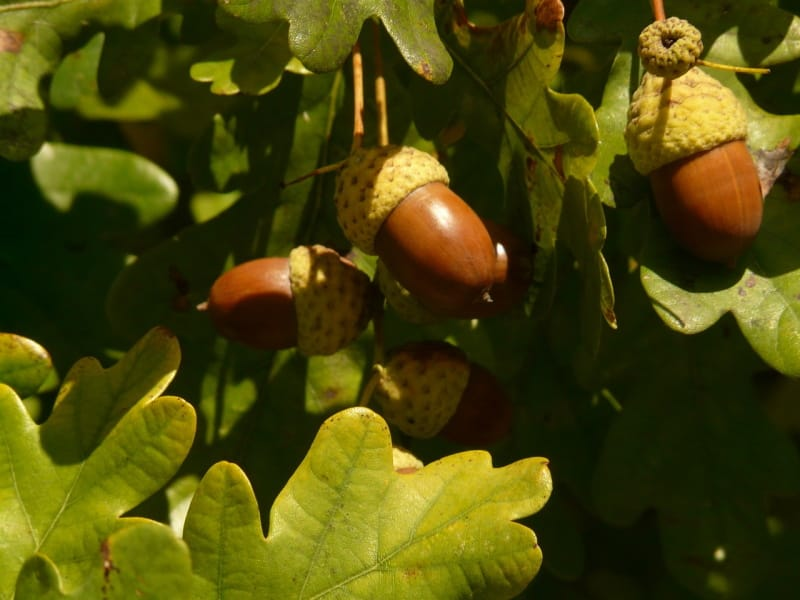 Valongo diz adeus a eucaliptos e vai plantar 2960 sobreiros
