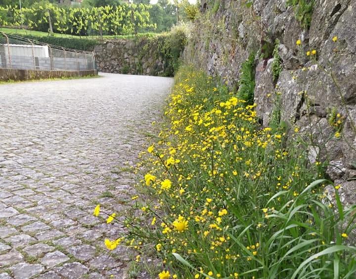 Freguesia de Braga deixa crescer vegetação espontânea para proteger insetos polinizadores