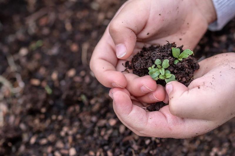 """Webinar: """"A sustentabilidade: usar o presente sem comprometer o futuro"""", 28 de maio"""