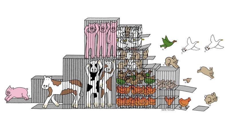 Parlamento Europeu aprova o fim do uso de gaiolas na pecuária