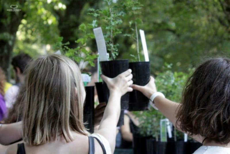 Universidade de Coimbra convida estudantes a cuidar de uma árvore durante o ano letivo